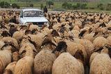 Трафик в Анадола ; comments:17