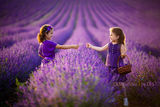 50 shades of Lavender ; comments:36