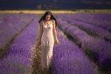 Lavender dream ; comments:33