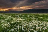 Последни мигове от пролетта ; comments:96