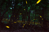 Светулки ; comments:16