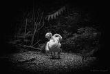 """Лебедово"" езеро ; Comments:11"