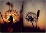 На залез слънцето е най-узряло... ; comments:48
