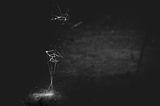 Хвърчилото и птицата ; comments:24