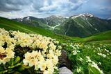 Лято в Кавказ ; comments:23