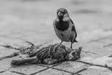 The last august of a sparrow ; comments:54