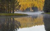 Утро с дъх на борова гора ; comments:94