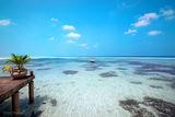 Малдивски мечти ; Comments:2