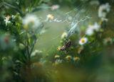 За тревата ,за цветята и още нещо ; comments:20