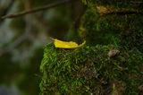 Частичка есен, от Родопите ! ; comments:37