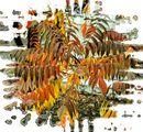 Есента през моя обектив ; Comments:19
