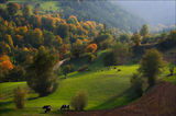 Цветовете на Родопа ; comments:91