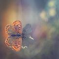 Есенна пеперуда ; comments:29