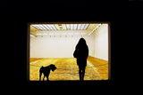 Злато,жена и куче. ; comments:6