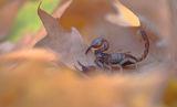 Нашенски представител на скорпионите.... ; comments:18