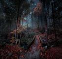 """Из приказните гори на резерват """"Стара река"""" ; comments:127"""