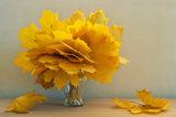 Есенно ; comments:14