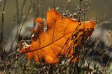 Есента си отива с последното окапало листо ; comments:9