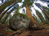 Sequoia National Park ; comments:16