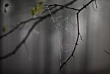Горска завеса ; comments:43