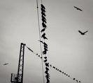 Бил ли си някога птица... ; comments:57