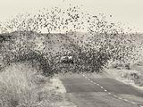 Птиците ; comments:80