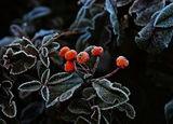 Скрежът - крехкото дихание на зимата ; comments:10