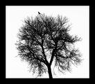 За птицата и дървото, за малкото и голямото, за черното и бялото, за удоволствието да се взираш в простотата на формите. ; comments:33