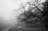 мъгла и пустота ; comments:33