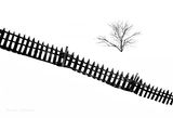 Зад оградата ; comments:41