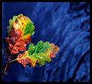"""""""Светът е малък, когато ни свързва обичта и огромен,  когато ни разделя времето..."""" ; comments:24"""