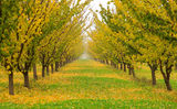 Есенна градина ; comments:85