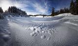 Някъде в зимните Родопи. ; comments:18