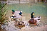 В малко то езерце край Вонеща вода ; comments:5