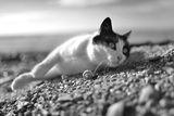 котка & рапан ; comments:15