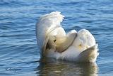 Лебед, Варна ; comments:6