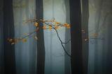 Есенни настроения ; comments:42