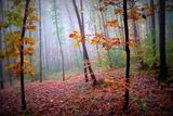 Есенна гора ; comments:34