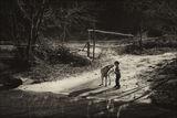 Момче и куче ; comments:86