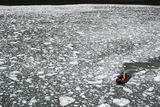 Пред глетчера Ел Брухо / Near El Brujo Glacier ; comments:18