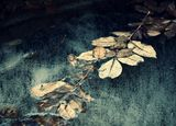 паметта на водата ; comments:13