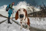 Портрет на едно любопитно куче ; comments:85