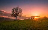Когато дърветата чакат пролетта... ; comments:16