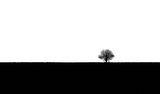 Просто дърво ; comments:18