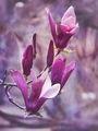 Пролетно... ; comments:41
