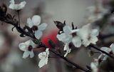 просто пролет… ; comments:32