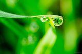 Пролетна роса ; comments:4