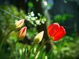 Пролетни състояния... ; comments:32