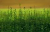 Време е за пролет ; comments:51