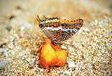 Кой не обича праскови?! ; comments:9